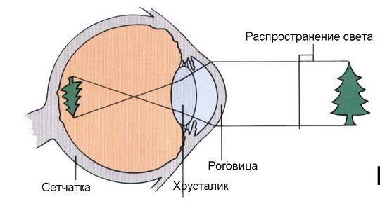 Преломление лучей в глазном яблоке