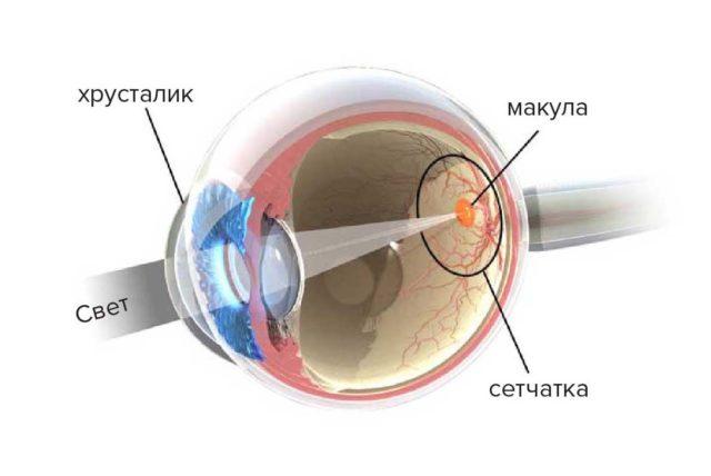 Линзы при возрастном ухудшении зрения
